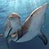 Dolphin Tales 2 70x70 .jpg